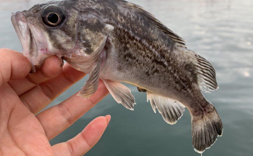 狙う魚は釣れればなんでも!餌釣りとワームで楽しんできました?