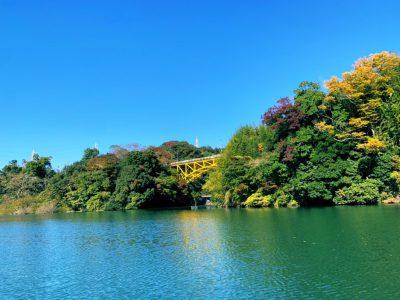 画像:yui20201112-3-2