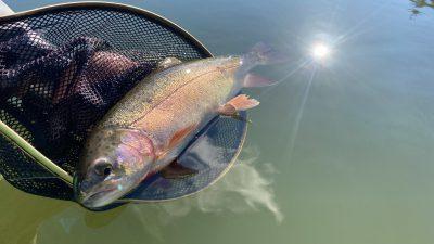 ハミングバード通天湖で釣ったレインボー