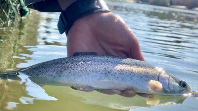 管釣りで釣れた魚