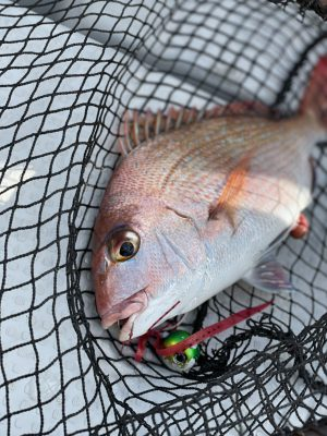 60cm 3.5キロの鯛1