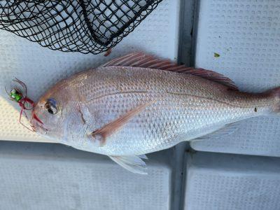 60cm 3.5キロの鯛2