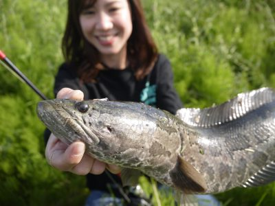 雷魚の顔の写真